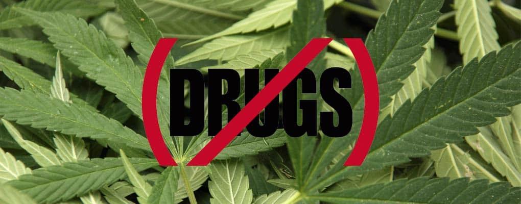 קנביס - לא לסמים